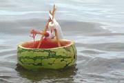 Vitorlásverseny ehető hajókkal