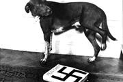 Újra engedélyezhetik a Mein Kampf kiadását