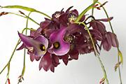Virágszörnyek