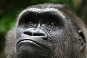 Csillagok, turizmus és gorillák