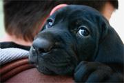 A kutyák közt is vannak optimisták és pesszimisták