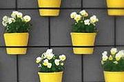 Falra szerelhető növények