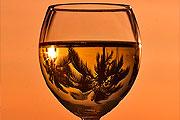 Heti két pohár bor nem árt a várandós nők magzatának