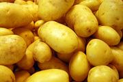 Rekord méretű krumplija termett egy hobbikertésznek