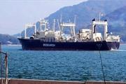 Nincs igény a bálnahúsra, de a japán bálnavadászok beindultak