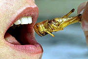 10 év múlva bogarakat fogunk enni