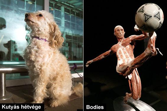 Bodies: http://en.wikipedia.org