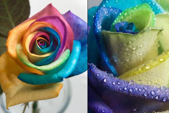 www.happy-roses.com