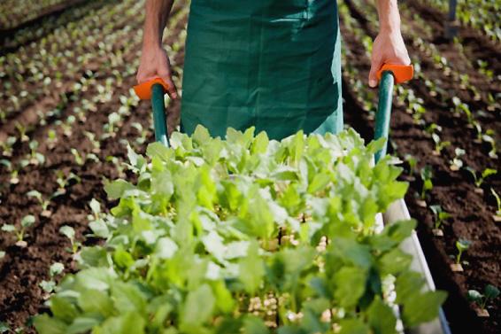 www.sos-gardening.com